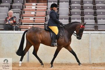 Kim Fizzell rode Kerry Stiphout's registered Australian Stock Horse, 'Fernbrook Playwright' (Fernbrook JJ Classic/F. Artistry) to win the Joan McKinley class for Ridden Part Welsh Mare/Gelding/Stallion Over 14.2hh.