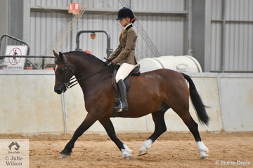 Megan Howe rode the Howe Family Equine nomination, 'Nawarrah Park Great Britain' (Llanarth Cardiff Arms imp UK/Annan Gwennan) to second place in the class for Ridden Section D.