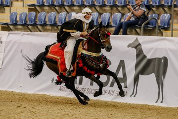 Dont Be Late and Tiffany Bignold showing they won't be late ,winning Gold Australian Champion in the costume class