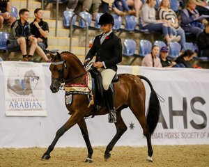 Echos of Tomorrow S Mc Curley and R Rogers Australian Gold Champion Ridden Arabian Stallion