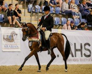 Echos of Tomorrow S Mc Curley and R Rogers Australian Gold Champion Ridden Arabian Stallion