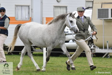 Lauren Farquhar did the honours with Belinda Goyarts', 'Raevon Tap N Go' (Torlyn Caraway/Barakee Tapestry) that won the class for Welsh Mountain Pony Two Year Old Filly.