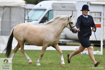 Megan Hodge's, 'Parklands Truffle' (Nattai Madog/Flowerdale Tiger Lily) is pictured during the class for WMP Dry Mare Four Years and Over.