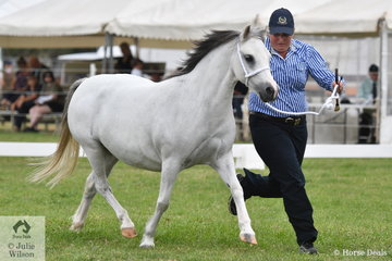 The Ripple Brook Pony Stud's, 'Ripple Brook Wistaria' (Weston Park Piccolo/Ripple Brook Lacey) took second place in the class for WMP Dry Mare Four Years and Over.