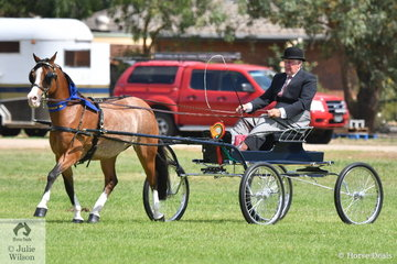Well known exhibitor and reinsman, Stuart Ryan drove his successful, 'Stillbrook Tigerlily' (Pen-nant High Flyer/Rivington Spinifex) to claim the Best Part Bred Harness Exhibit Award