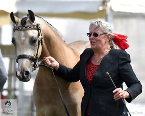 Former Yarra Valley resident and now local, Debby Cheeseman is pictured with her  Two/Three Year Old Part Welsh Colt/filly/Gelding to Mature Over 13.2hh  winner, 'Keira Park Unforgettable' (Keira Park Cascade/Baring Court Ingalia) that went on to claim the Reserve Champion Part Bred Youngstock Award.