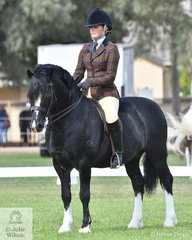 Taylah Lee is pictured with her own and Rebecca Lee's charming Reserve Champion Section C Male and Supreme Ridden Welsh, 'Cataraqui Hasufel' (Nattai Sprig/Cataraqui Arielle).