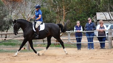 RM Zebedee by Capone (Imp/Dec) from PS Lonavale (Lontano Dec) owned and ridden by Rebecca Moore Studbook Ridden & Open Scored  71%