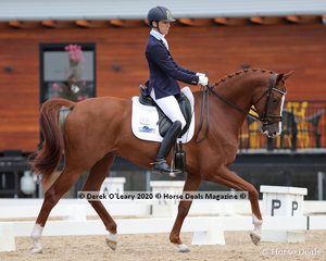 """""""Bloomfield Vegas"""" ridden by Janet Seccull in the 5 Year Old Young Horse Class scoring 72.400%"""