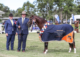 The Gilbunna Stud Supreme Champion Led Native Pony Karrington Lodge Take Note exhibited by Kerrie Donovan & Suburban Lodge, pictured here with Stewie Robinson and Victorian judge Jeremy Roberts.
