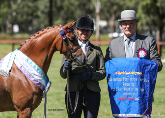 Runner up Led Part Welsh Pony of the Year Strathford Selena, exhibited by Kirsten Strath, pictured here with Tasmanian judge Danny Hawkes.