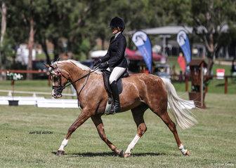 Emma Adam's riding Rebecca Lloyds beautiful palomino mare Crown of Gold.