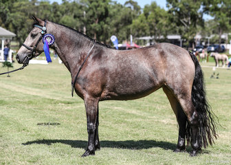 Champion Led Connemara Baeluka Park Cherish, exhibited by Brooke Allan & Baeluka Park.