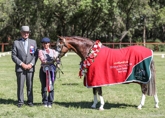 Supreme Champion Led Welsh Gelding Bamborough Bright Lights, exhibited by Karen Thomsen and pictured here with Tasmanian judge Danny Hawkes.