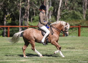 Dr Harry Cooper & Susan Sheeran's gorgeous golden stallion Arcadian Anzac Hero, ridden by Emma Adams.