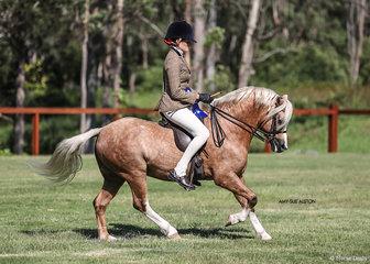 Dr Harry Cooper & Susan Sheeran's gorgeous golden stallion Arcadian Anzac Hero, ridden by Emma Adams.