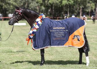 Supreme Champion Arabian Riding Pony Korana Magnifique, exhibited by Brandy Hollow Park.