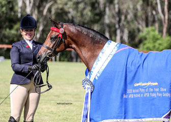 APSB Partbred or APSB Riding Pony Gelding of the Year & Runner-up ridden APSB Partbred or APSB Riding Pony of the Year Koorana Royal Romance, exhibited the Tyre Family.
