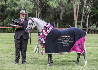 The Bamborough Australian Champion of Champions In-Hand winner Koora-Lyn enchanting exhibited by M Whyte & Suburban Lodge. This Beautiful mare also won the Australian Pony of the Year.