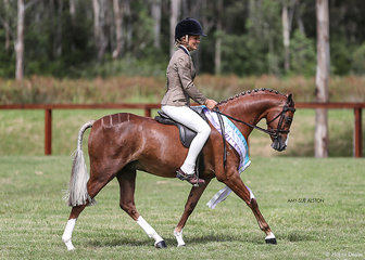 Runner-Up Ridden Show Hunter Riding Pony of the Year Bamborough Ari & Elizabeth Davies.