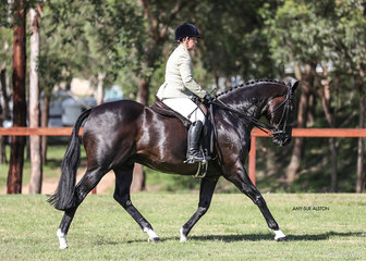 Kirkston from Tasmania Working out in the All Breeds ridden Championship, exhibited by Kim Douglas.