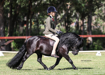 Lee Purchase's Shetland Pony stallion Lentara Tremonti working out in the All Breeds Ridden Championship.