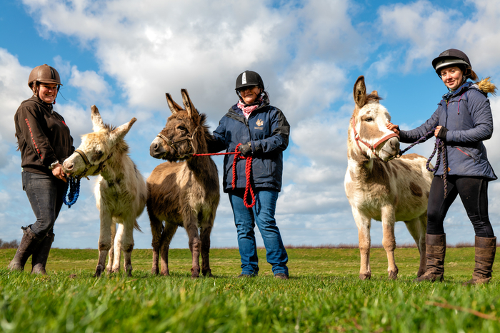 David, Connie & Theo (L to R) with grooms, six months after rescue. (The Donkey Sanctuary)