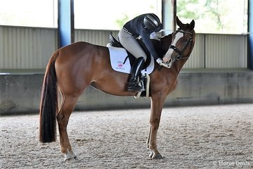 Jaybee Ad Astra by Jaybee Alto out of Jaybee Amazon (Aachimedes (Dec)) Owned and shown by Joanna Barry Image: Mary McBurnie