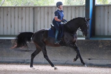 Hollands Bend Shangri-La by Sezuan out of Hollands Bend Regalite (Royal Classic (IFS)) owned and shown by Judith Smith. Image Kate Turnbull