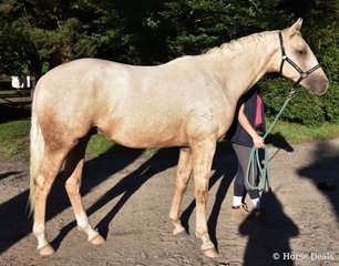 Coldstream Quest for Fame by Quasi Gold MD (IFS) out of Ginger Rogers (Fred Astaire(IMP)) owned by Wendy Ansell - Coldstream Park. Image: Mary McBurnie