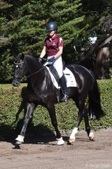 CJP Denzel by De Niro (IFS) out of CJP Floriana (Flemmingh (IFS)) owned by CJ Park Warmbloods, ridden by Claire Moulds. Victorian Reserve Champion Ridden Studbook and Ridden Open Horse and  NATIONAL RESERVE CHAMPION RIDDEN STUDBOOK HORSE Image Mary McBurnie