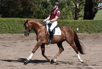 CJP Sir Dragonfire I (ET) (AKA Puff) by Sir Donnerhall I (IFS) CJP Floriana (Flemmingh (IFS)) owned by CJ Park Warmbloods, ridden by Travis Cole. Victorian Reserve Champion Led Studbook Horse. Image: Mary McBurnie