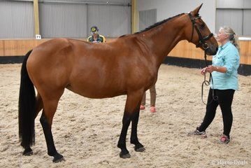 Northern Fiona by Northern Favus II out of Northern Villia (Northern Villius II) Owned and presented by Samantha Taylor. Image: Mary McBurnie