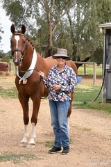 Jaybee Blenheim by Baluga (IMP) out of Jaybee Aussie Maid (Jaybee Alabaster (IIU)) with Bev Chugg, owned and shown by Caroline Coleby Image: Mary McBurnie