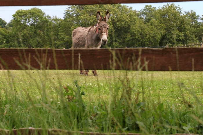 The Donkey Sanctuary blooms under lockdown