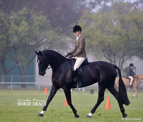 """Second placegetters in the Newcomer Show Hunter Hack class """"Entally My Signature"""", exhibited by Georgie Batten."""