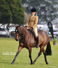 """Penny Ransom rode """"Just A Star"""" to take Reserve Champion Show Hunter Galloway."""