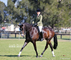 """Supreme Champion Show Hunter of the Show """"EBL His Royal Highness"""" and Andrea Goldrick."""