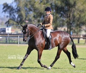 """Tallyho Velocity"" was ridden by Emma Adams to win Reserve Champion Show Hunter Hack for owner Mel Clarke."