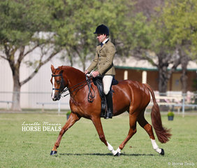 """""""Daisy's Davina"""" was the Champion Show Hunter Galloway of the Show, owned by V Chidgey."""