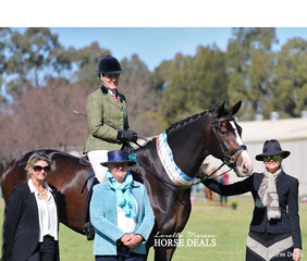 """Judges Di White, Lindy Walker and Sally Hallis with their Supreme Champion Show Hunter Exhibit of the Show """"EBL His Royal Highness"""" and Andrea Goldrick."""