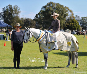 "Supreme Champion Australian Stock Horse ""Brewers Binnawee Conductor"", ridden by Amy Bonsor and owned by Skye Newling. Pictured with judge Sharleen Flanagan."