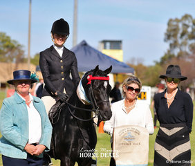 "Supreme Hack of the Show ""Pickwick Park Mr Darcy"" ridden by Courtney Cremesco for owers Sarah & Elsie Rieger. Pictured with judges Lindy Walker, Di White & Sally Hallis."