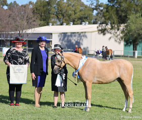 """Alison Rae with her Multi Champion winning """"Paulgren Park Mr Vantastic"""", they were declared Supreme Champion Exhibit of the Show. Pictured with judges Nicolette Jones-Ryan and Julie Tayler."""