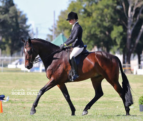 """Courtney Cremasco riding """"Fairplay"""" went Reserve Champion Show Hunter Hack in the afternoon round of classes."""