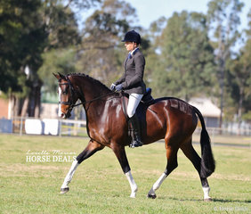 "Amanda Maddigan rode Mel Gilles' ""Verdict By Direction"" to win Champion Show Hunter Hack in the afternoon classes."