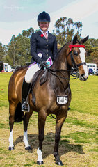 The successful Breakaway Xzotika owned and ridden by a delighted Keely Rayson was awarded Reserve Champion hack.