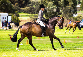 Lily's Finale owned by the Hoad Family was well rewarded at his debut show winning the Newcomer, First Season and Champion Show Hunter galloway events ridden by Margot Haynes.