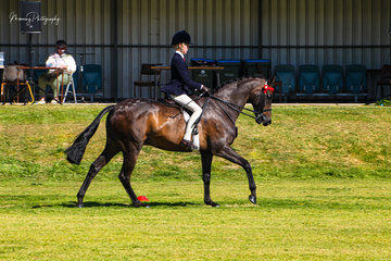 Millie Quigley- Smith returned to the show ring from her time in the show jumping arena over the past few months to enjoy success in the hack ring with her own Leanda Chances Are.