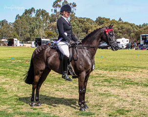 Louisa Smith rode her own Leeara Park Royal Jester still in his first season of showing to Reserve Champion galloway